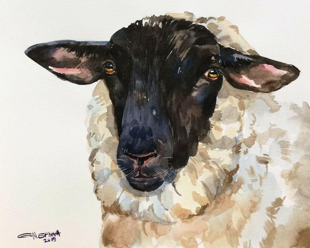 Black Faced Sheep Portrait Ewe Animal Farm Animal Original