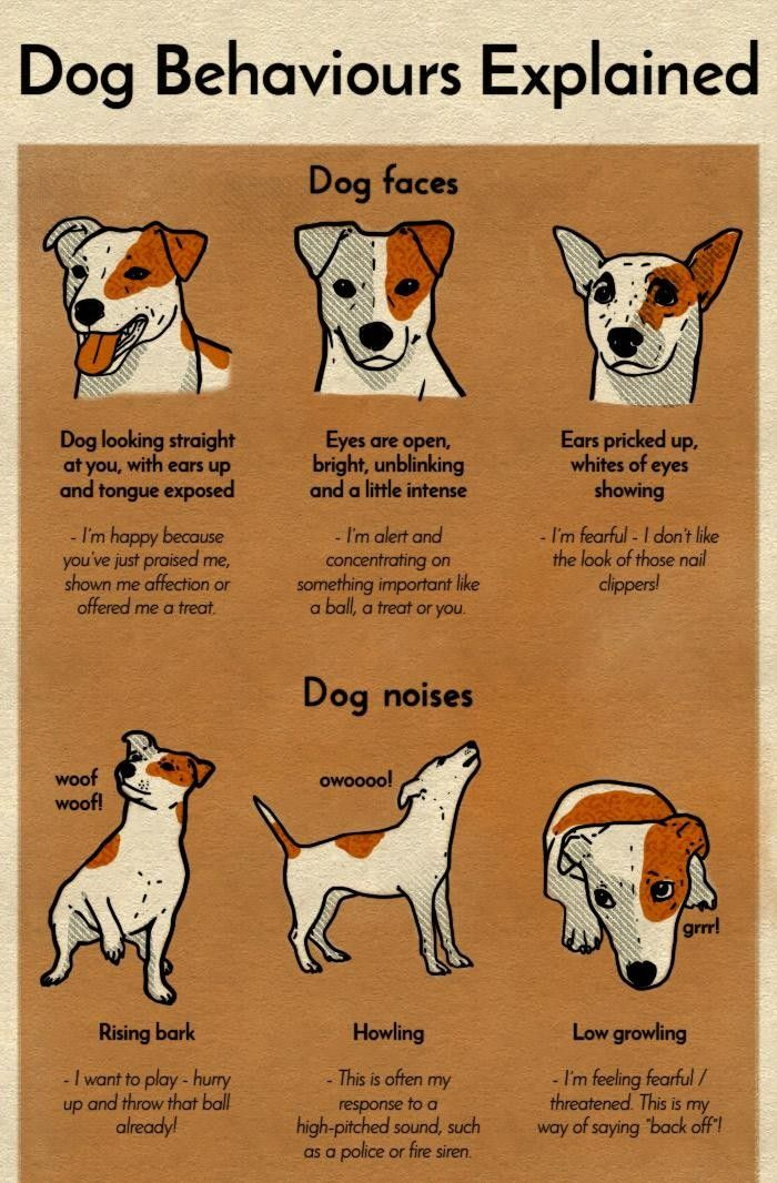 A Chart That Will Help You Finally Understand Your Dog Dog Body
