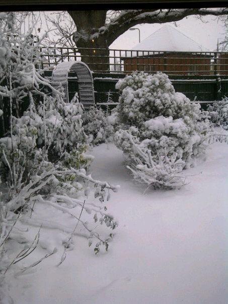 my Christmas garden