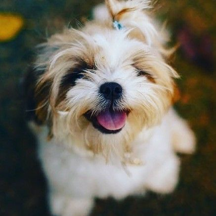 Hello Friday 🐶❤️❤️ #dog  #dogsofinstagram  #puppy  #doglover  #dogoftheday  #dogs  #dogstagram