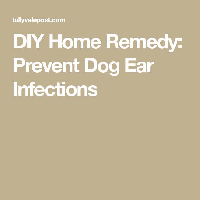 Diy Home Remedy Prevent Dog Ear Infections Animal In 2018