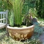 water garden for a tiny spaces
