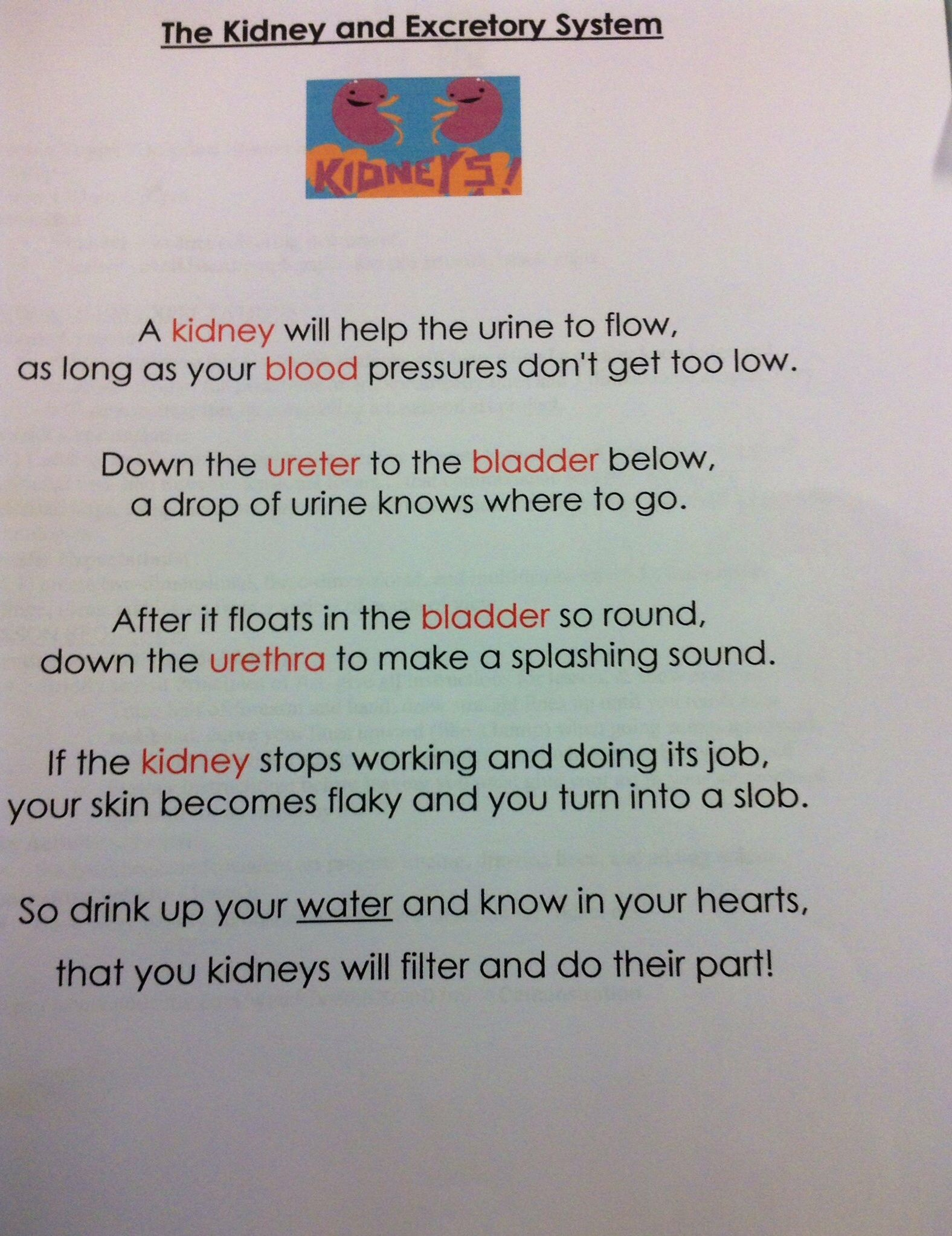 The Kidney Excretory System Poem Handout 5th Grade Activities