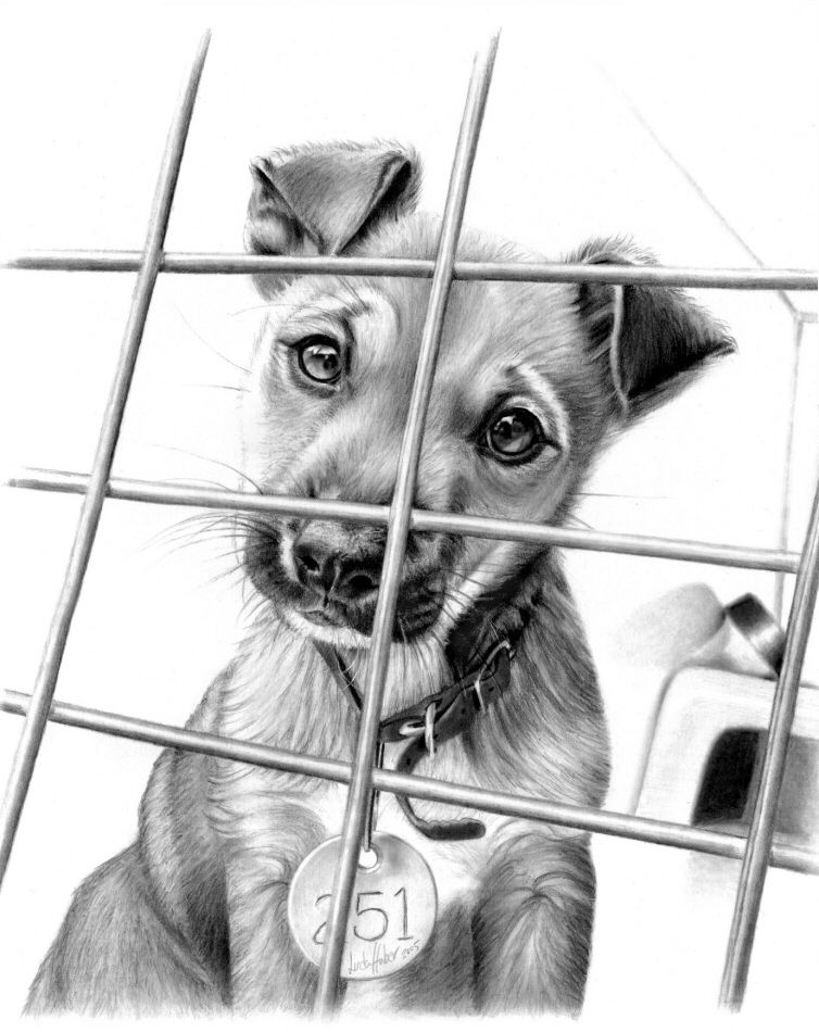 Dog - Amazing Animal Drawings From Great Pencils | Illustration | Pinterest | Animal Drawings ...