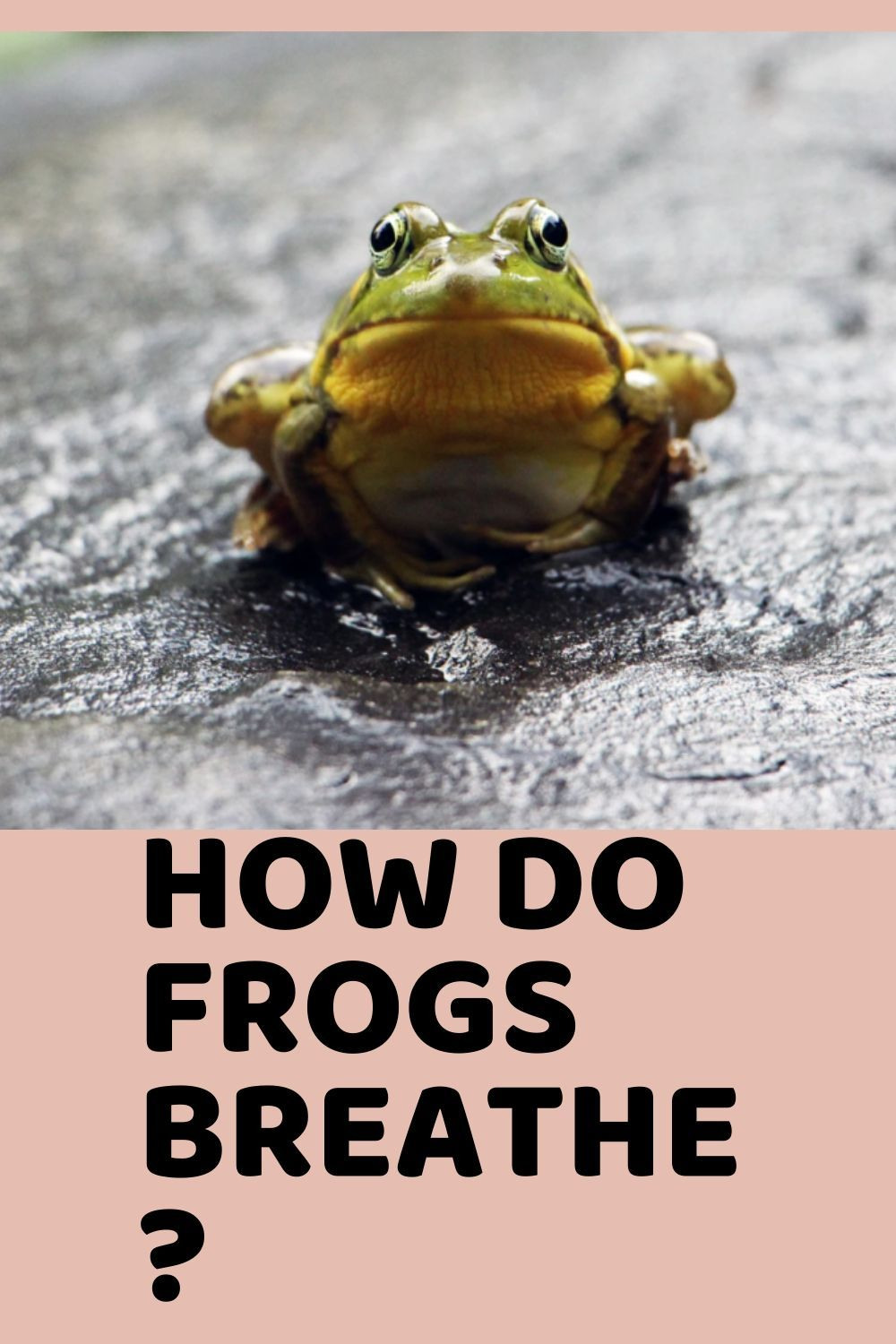Best 10 Ways How Do Frogs Breathe Frog Breathe Small Frog