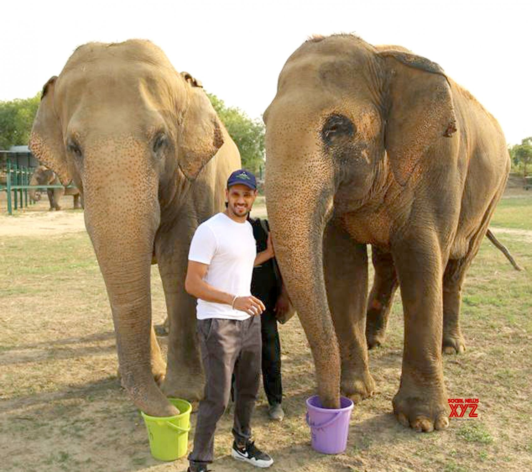 Image result for varun dhawan elephant