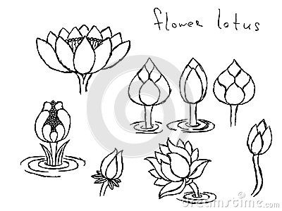 Pencil Drawing Lotus Stock Images