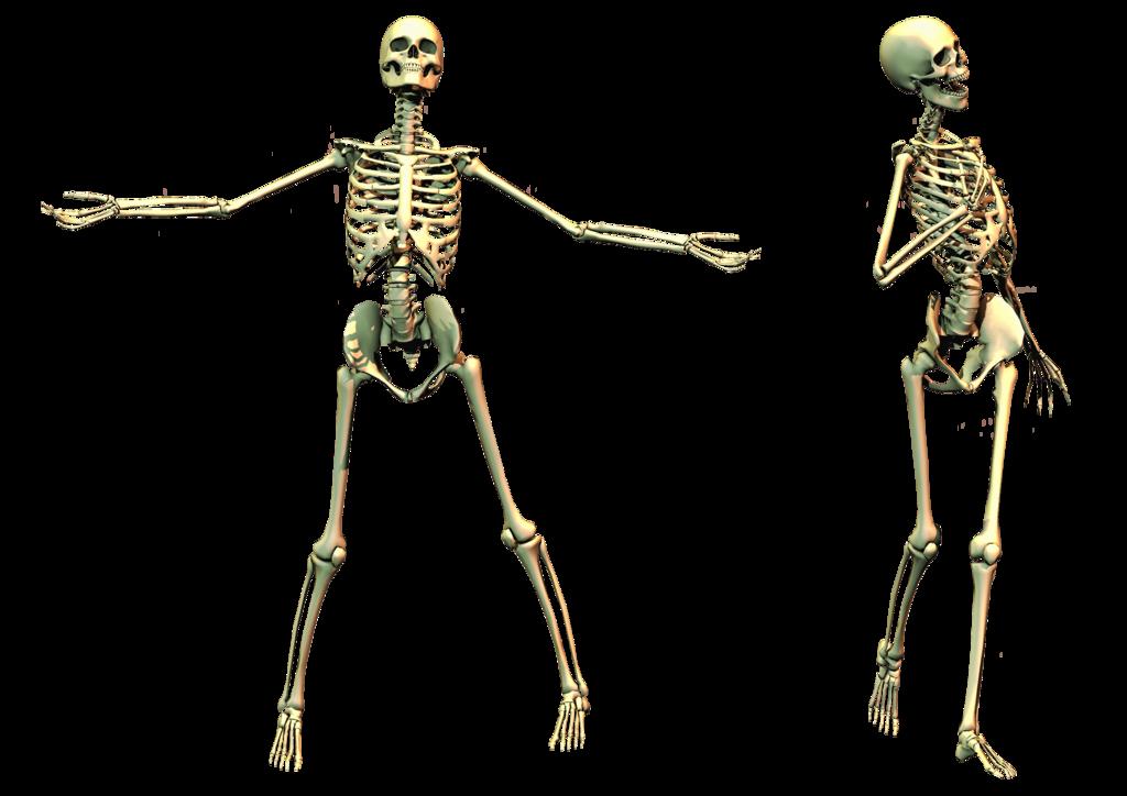 Skeleton Skull Png Image Skull Skeleton Png
