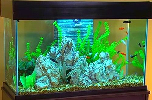 Fish Tank With Stand Set Up Jpg Fish Tank Fresh Water Fish Tank Tropical Freshwater Fish