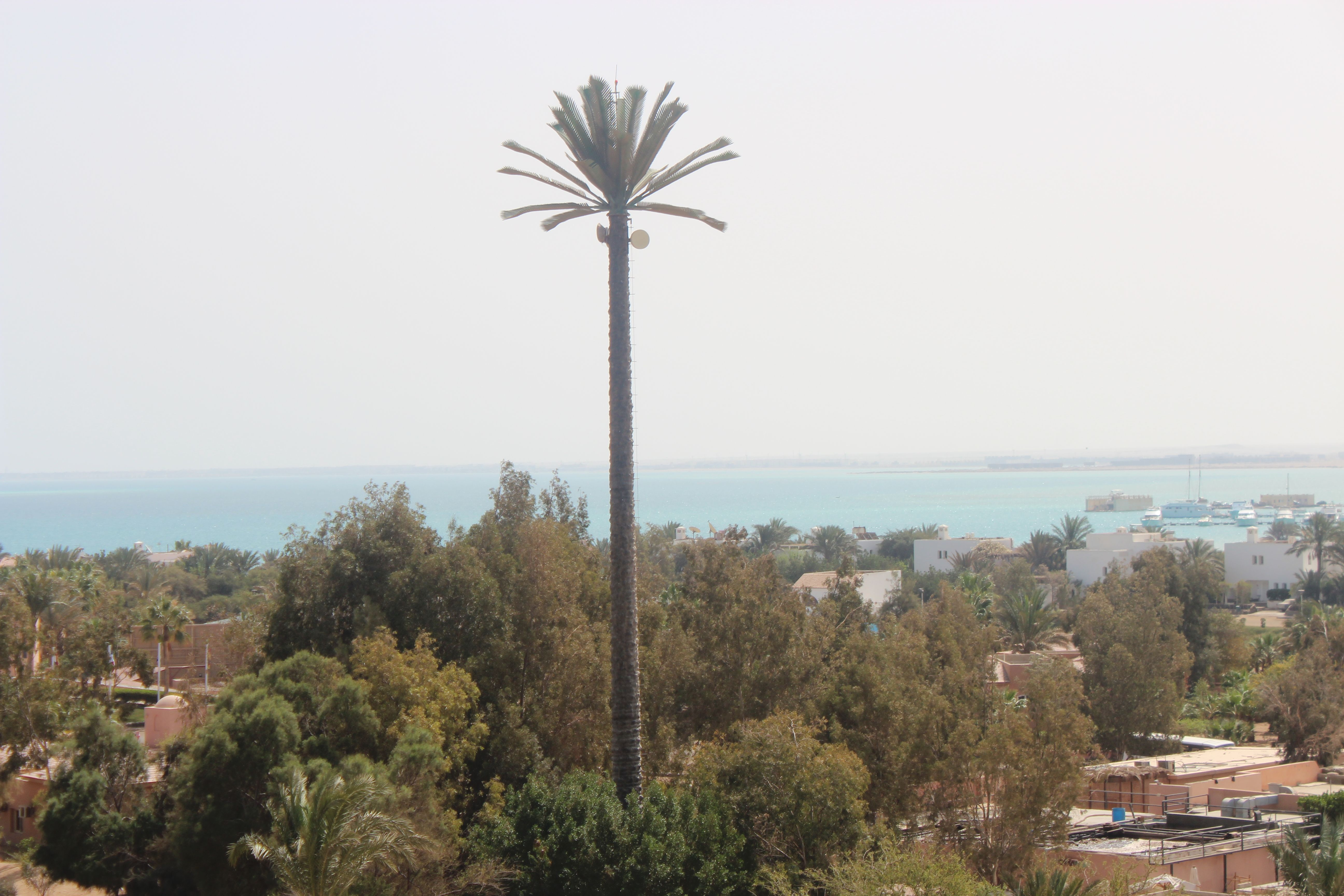 Mobile phone mast palm tree in El Gouna