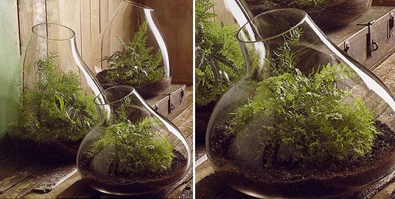 Recycled Glass Bubble Terrariums - Recycled Glass Bubble Terrariums Terrariums Pinterest Terraria