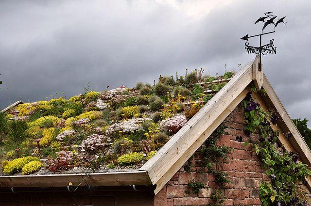Lakeland Green Roof Green Roof Roof Garden Rooftop Garden