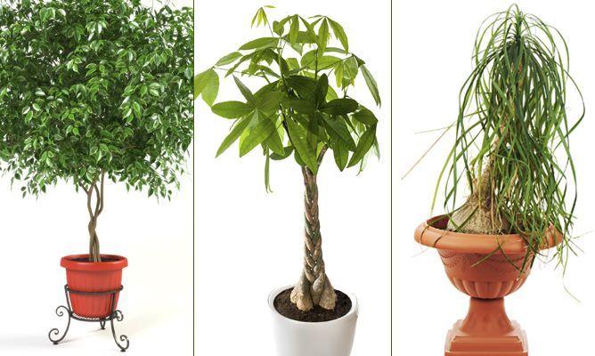 plantas de interior con tallos decorativos