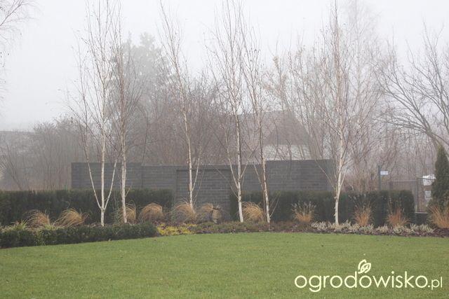 Ogród z lustrem - strona 130 - Forum ogrodnicze - Ogrodowisko