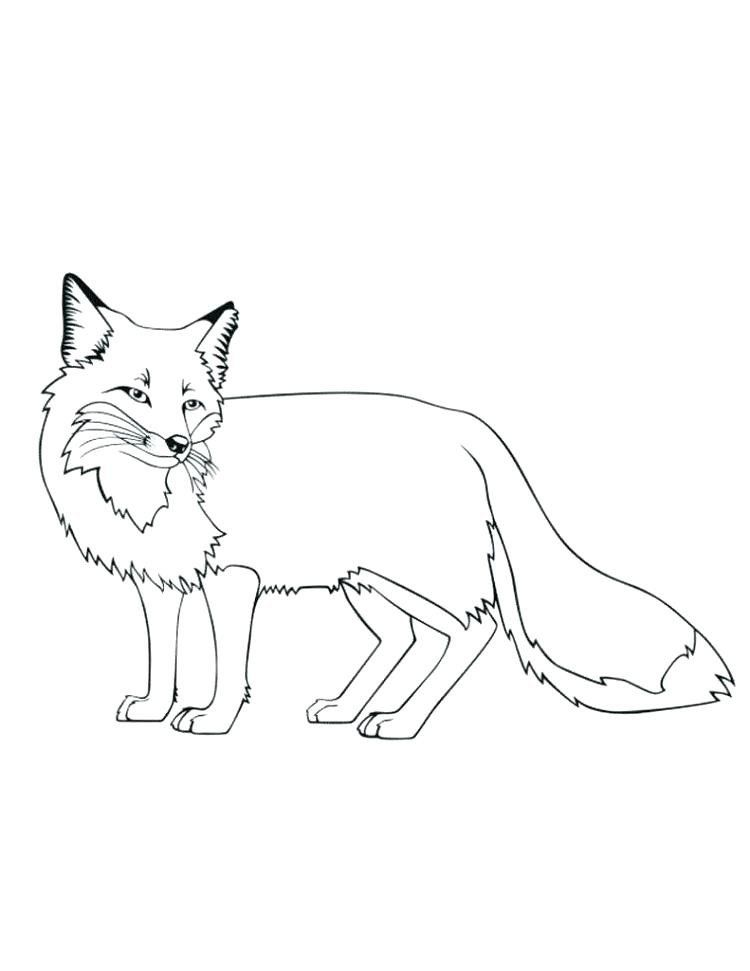 Cute Baby Fox Coloring Pages Cute Baby Fox Coloring Pages At Getdrawings In 2020 Fox Coloring Page Horse Coloring Pages Coloring Pages