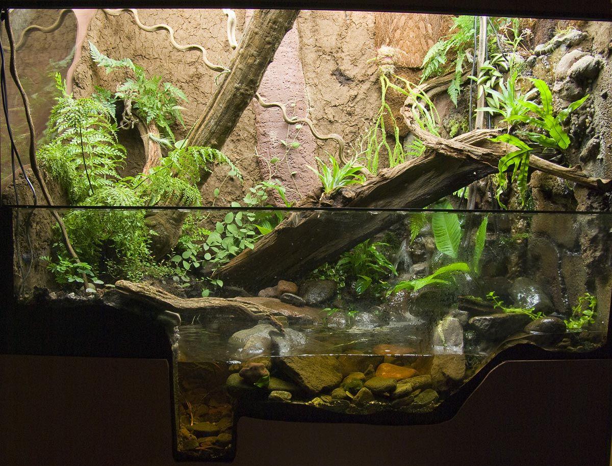 Hill stream paludarium dendroboard vivariums paludariums