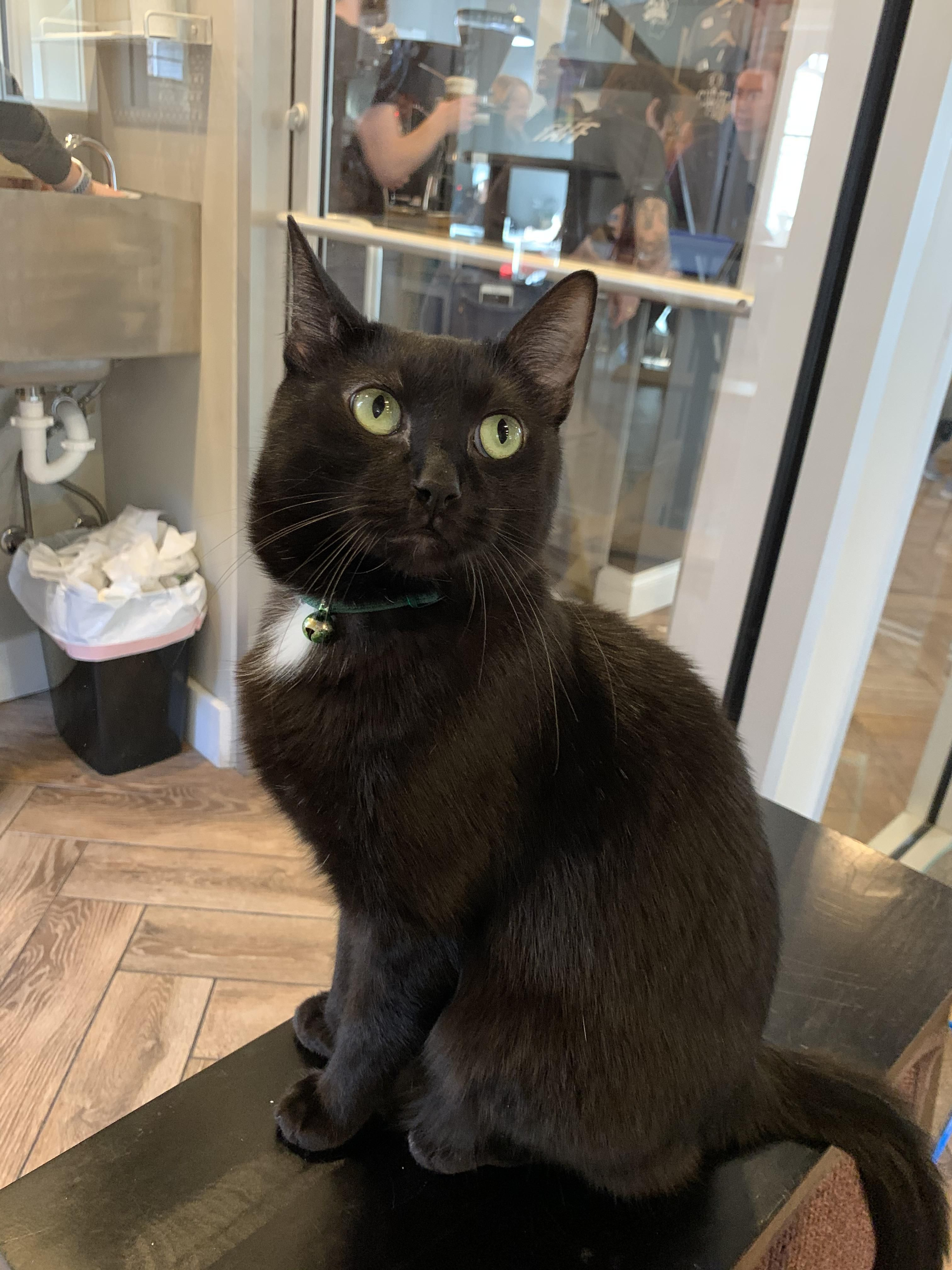 Found At A Cat Cafe In My City Teelast Com In 2020 Cats Kittens Cutest Cat Cafe