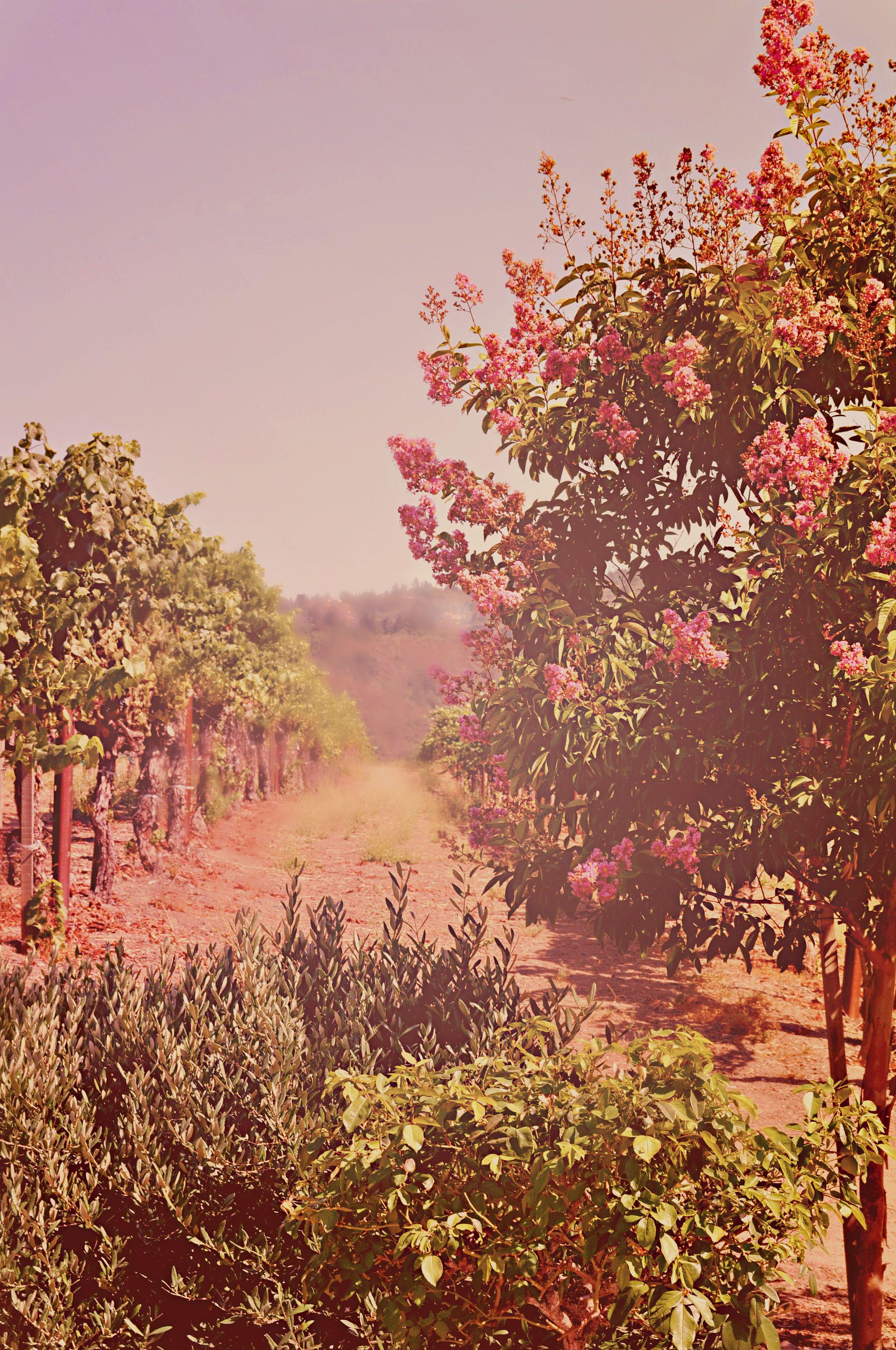 Savannah-Chanelle Vineyards in Santa Cruz Mountains