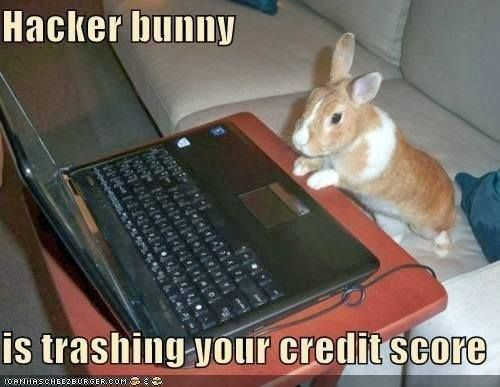 Pin By Travelers Station 旅好きステーション On Bunnies Make Life Better Funny Bunnies Cute Baby Animals Rabbit