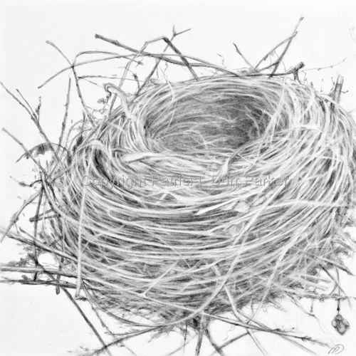 Empty nest drawing