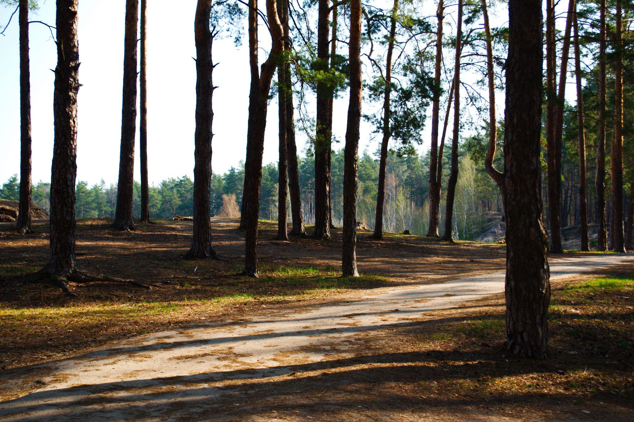 https://flic.kr/p/JzjkdH   Spring landscape. The road in the woods, at the ravine.