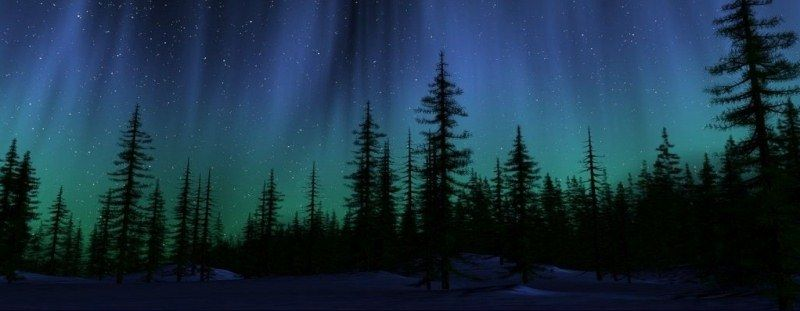 Pine Trees at Night | Image of Northern Lights over pine ...
