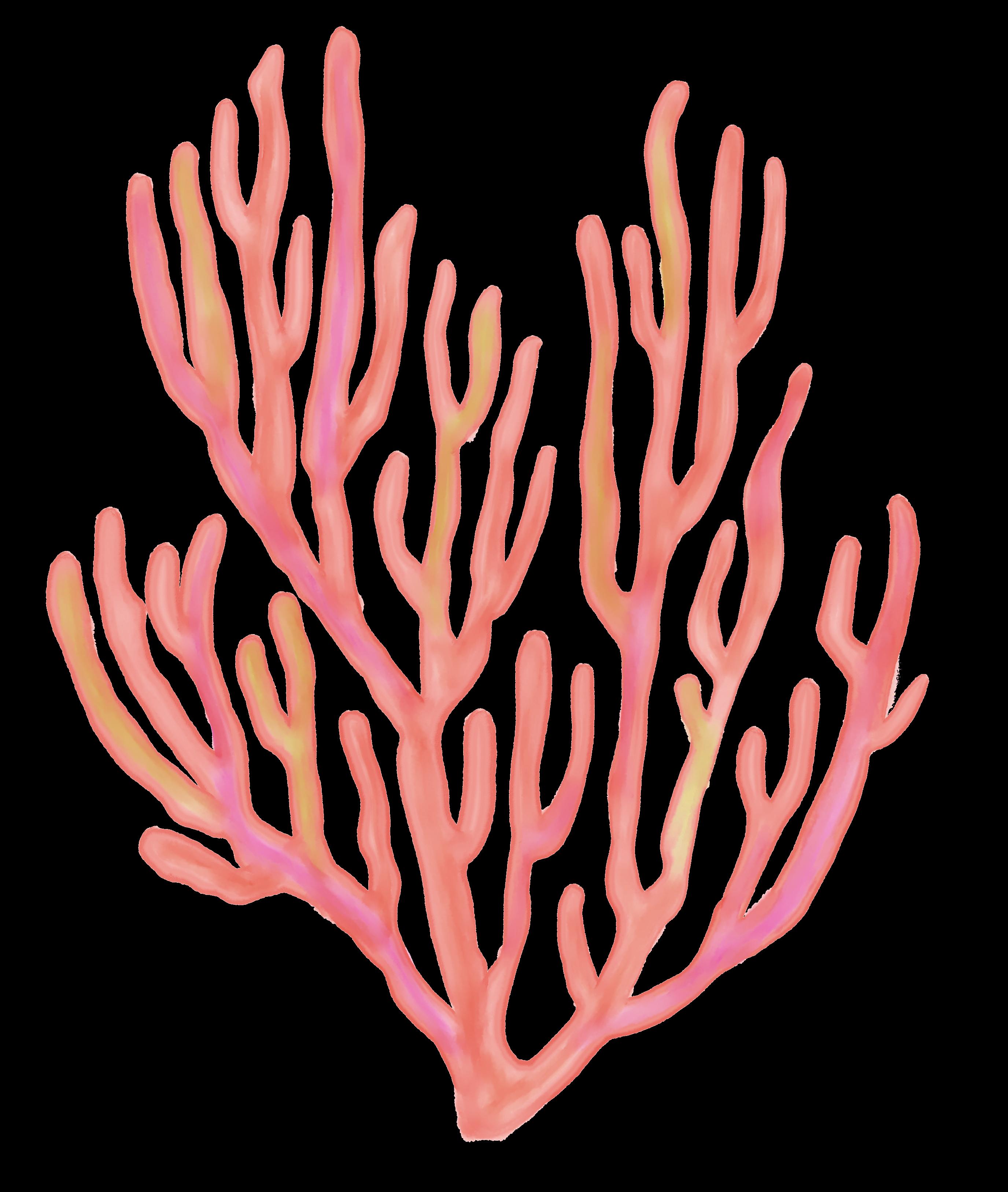 Pin by Tamara Nesic on art prints Fan coral, Coral
