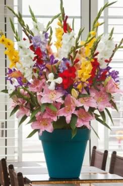 Miewczyki Irysy I Lilia Plants