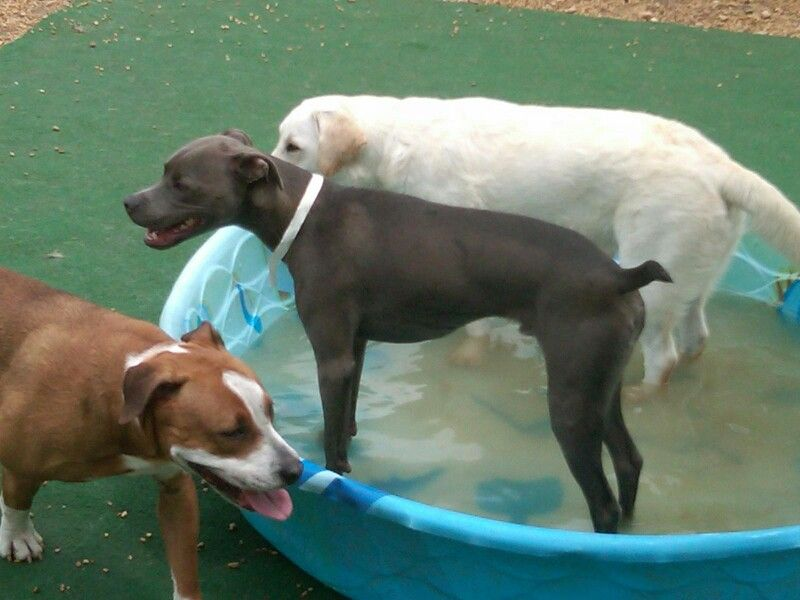 Pool Fun With Friends Pet Resort Pet Boarding Pets