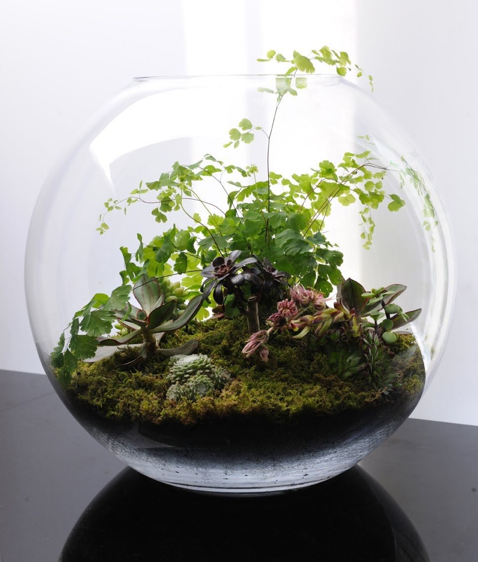 Terrarium green pinterest gardens glass fish bowl and plants