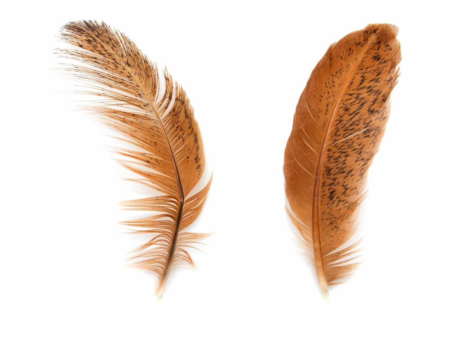 Feather Hd Desktop Wallpaper Free White Feather Wallpaper