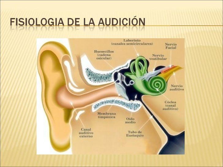 fISIOLOGIA DE LA AUDICIÓN | Libros | Pinterest | Logopedia, Lenguaje ...