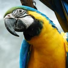colorati e chiassosi: ecco i pappagalli