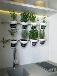 Casa foa plantas arom ticas en la cocina maceta - Plantas aromaticas en la cocina ...