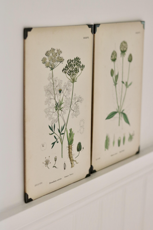 Original Vintage Botanical Prints Framed Botanical Prints Vintage Botanical Prints Botanical Prints Decor