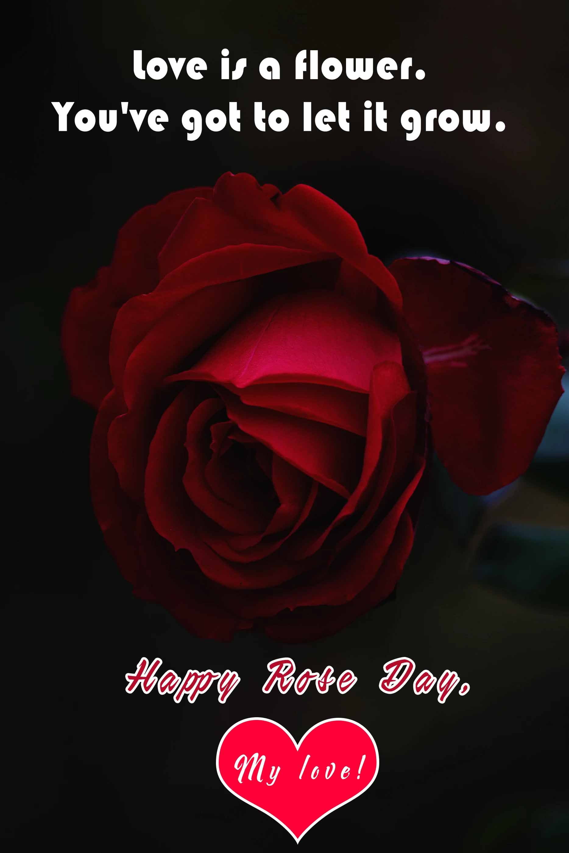 Happy Rose Day Sms Wishes For Whatsapp Status A Single Rose Can Be My Garden A Single Friend My World A Bunch Of Ro Valentine S Day Quotes Day Wishes Rose
