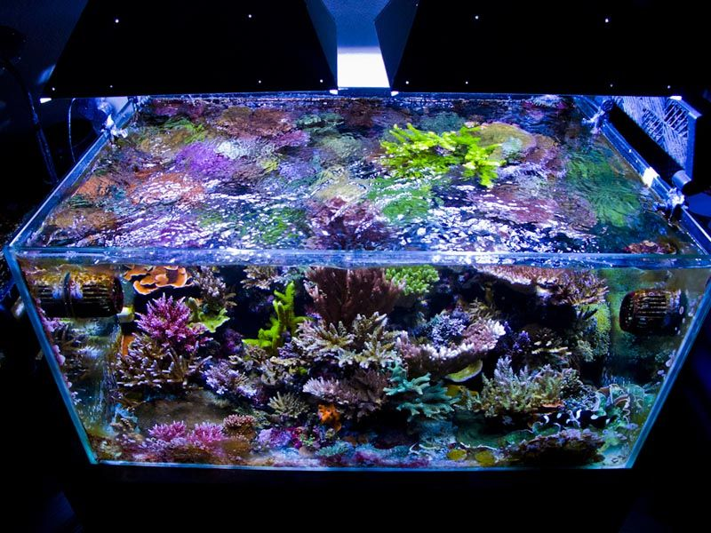 Reefkeeping October 2013 Tank Of The Month A Reefaholic
