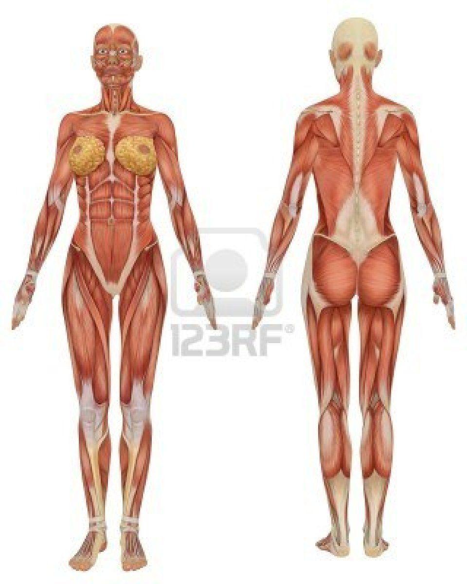 female anatomy diagram - Google Search | mardi gras costume 2013 ...