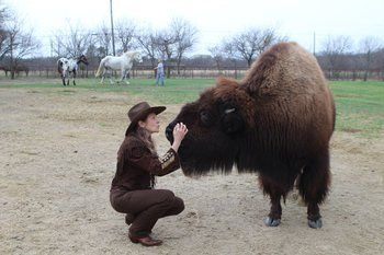 Housebroken Bison Sold On Craigslist Finds New Home Selling On Craigslist Bison House Breaking