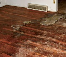11 Wood Flooring 11 Wood Flooring Problems And Their