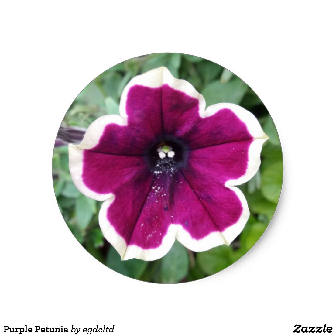 Purple petunia classic round sticker flowers floral flower design unique style