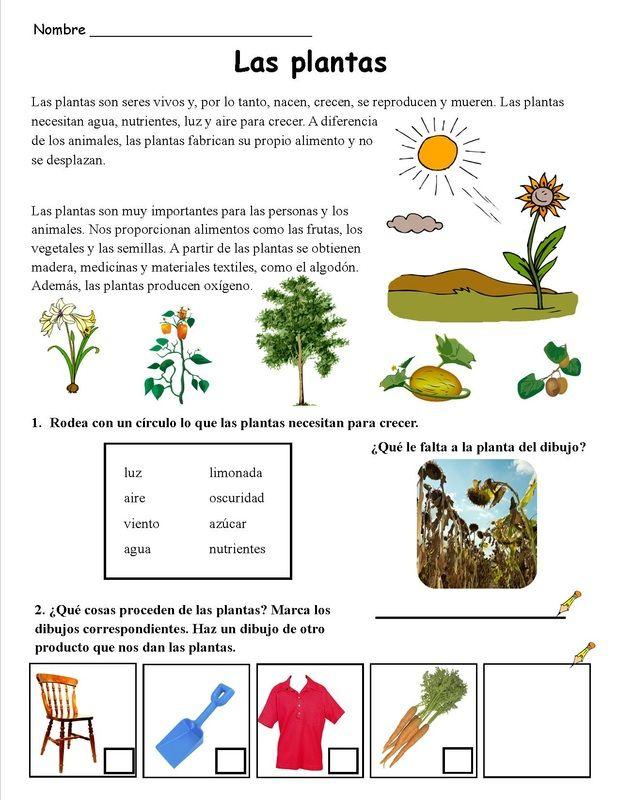 peque a actividad sobre las plantas seresvivos