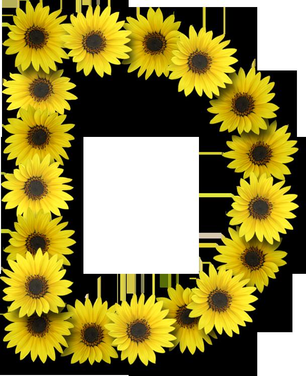 Alfabeto sunflowers .....D | Lettering alphabet, Floral ...
