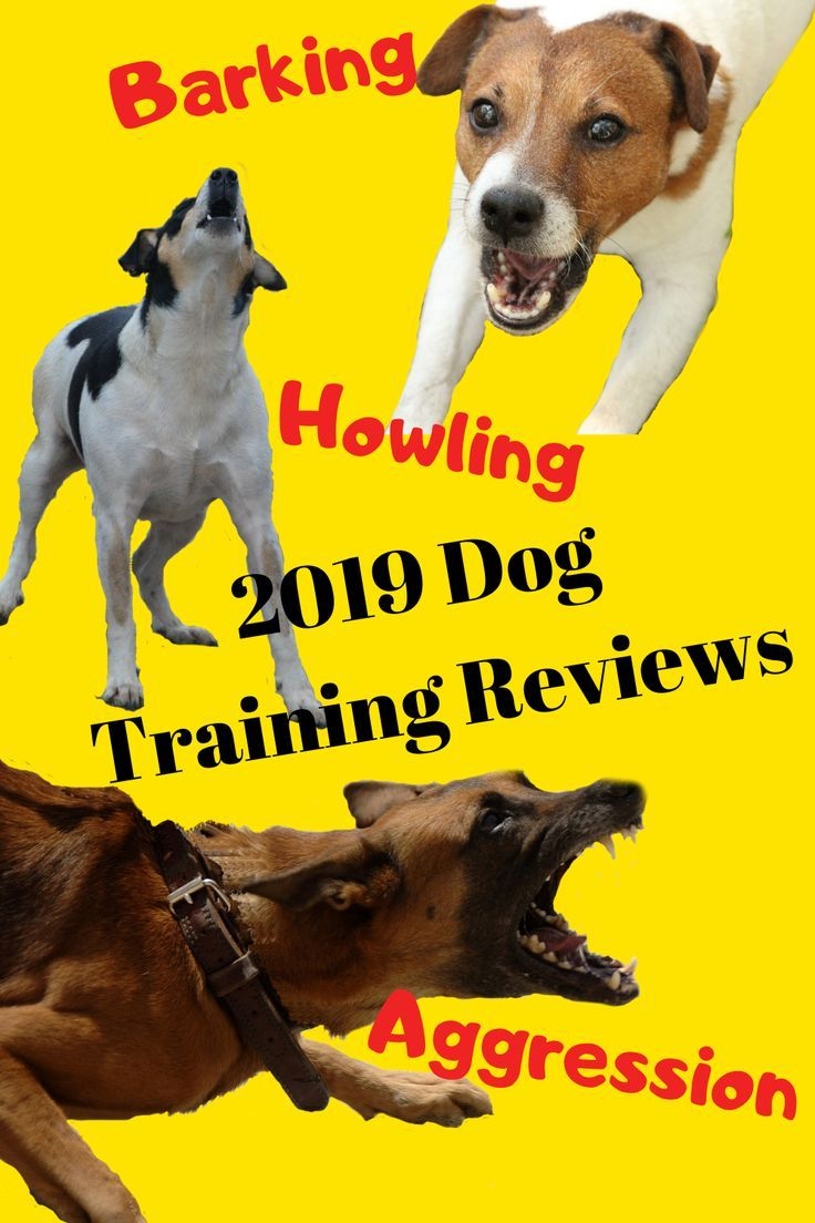 If You Re Looking For A Dog Training Program This Is A Pretty Good