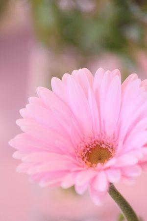 花とピンク色のガーベラ すべて無料 フリー の写真素材 Pakutaso ぱくたそ Daisy Flower Arrangements Pretty Flowers Beautiful Flowers