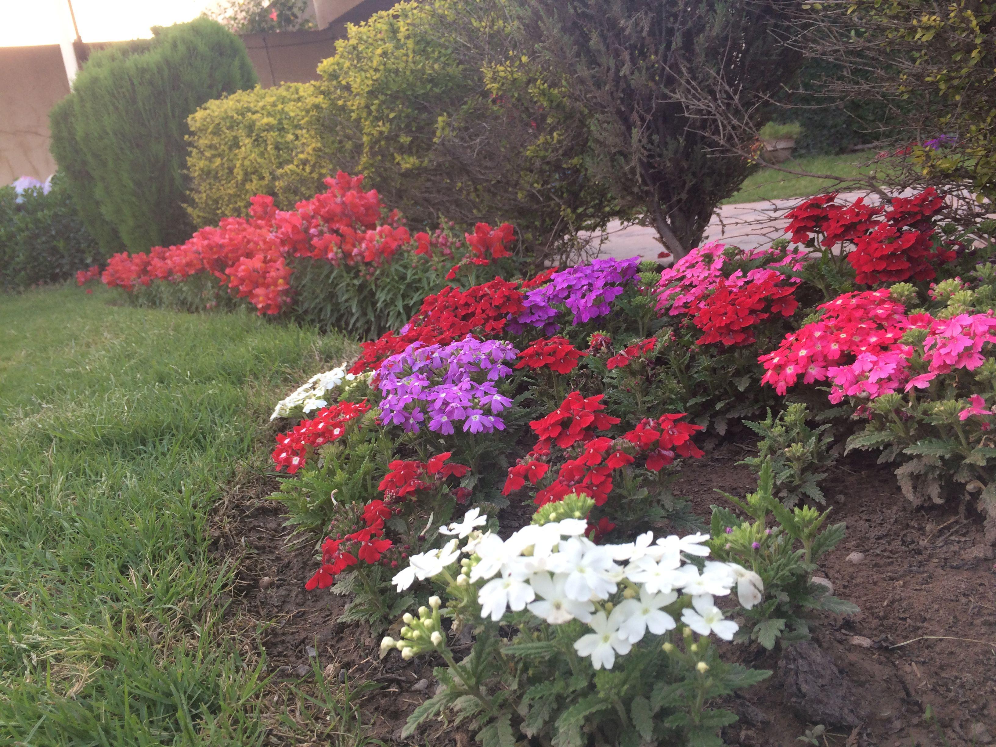 Pin by iriah sml on flowers pinterest flowers