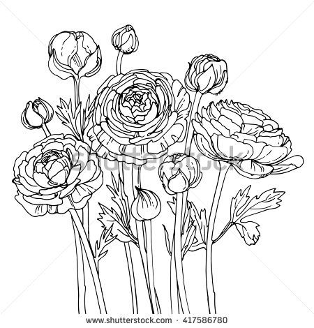 Garden buttercups ranunculus garden flowers painted line for Buttercup flower coloring pages