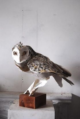 Owl_Perched