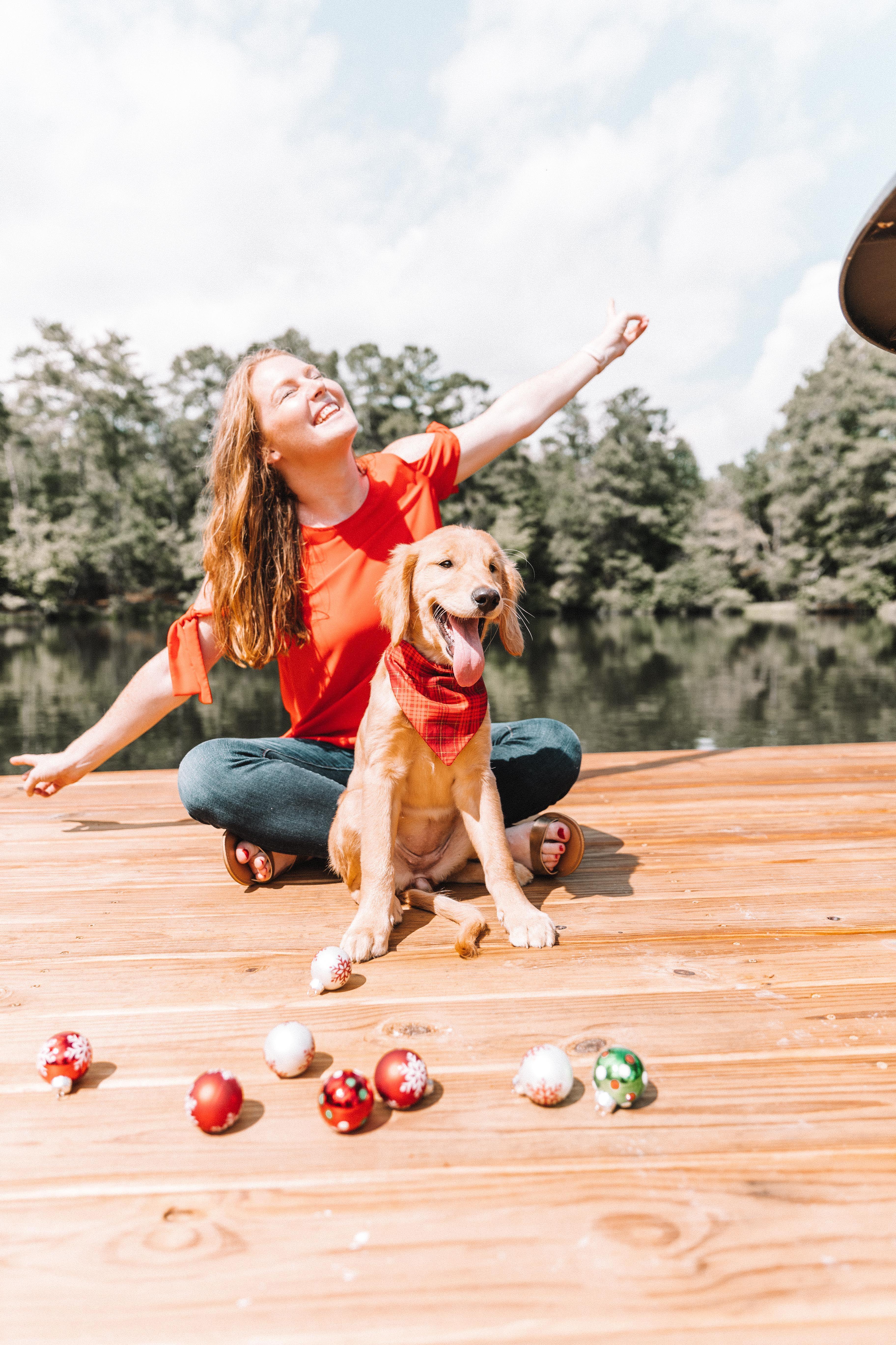 Red and gold plaid dog bandana christmas photos christmas cards