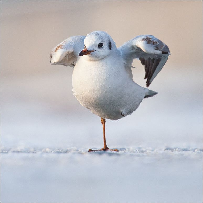 seagull by Robert Adamec on 500px